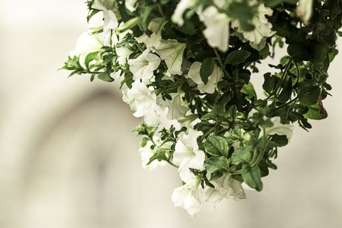 All-white_.jpg